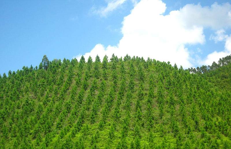 高陵县2011年度三化一片林绿色家园建设造林工程