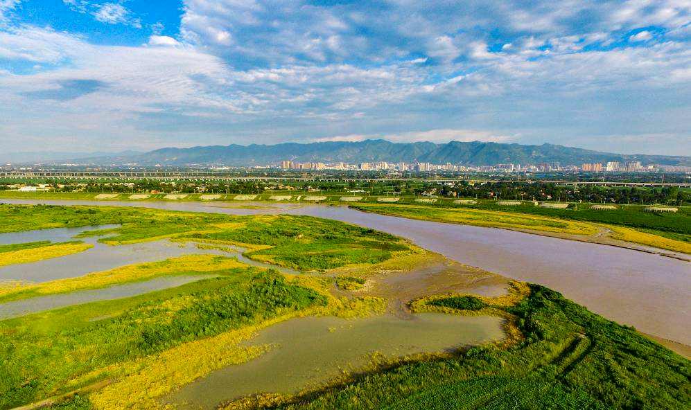 渭河高陵段右岸堤顶绿化提升工程(灞桥界-西韩路)