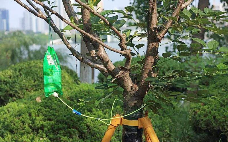 园林绿化中的根外施肥技术